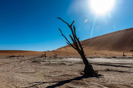 Dead Trees against against the red backdrop of the towering sand dunes of Namibias Deadvlei