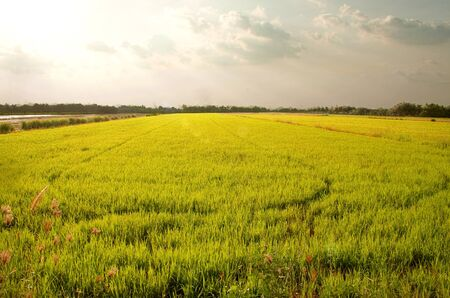 Rice fields in Thailands capital. photo