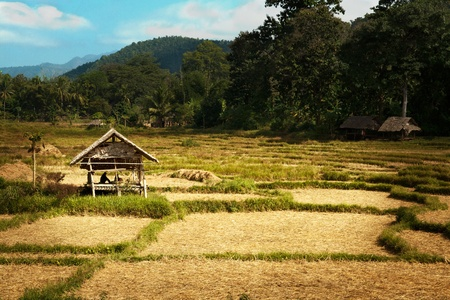 Sun shines golden rice hut. photo