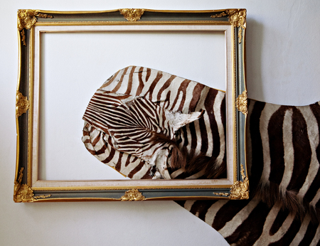 Zebra leather used home decoration  photo