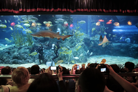 BANGKOK, THAILAND - JAN 3  shows a diver feeding the fish in the aquarium siam ocean world on Friday, January 3, 2014 in Bangkok, Thailand  Editorial