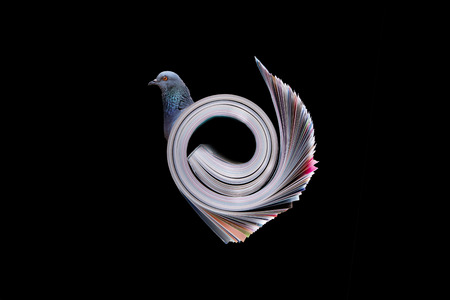 Pigeon concept with books  photo