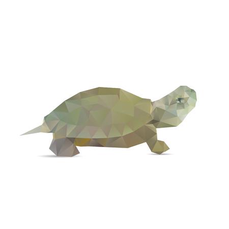 turtle isolated: Tortuga aislada en un fondos blancos