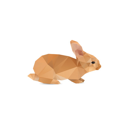 pet breeding: Rabbit abstract isolated on a white background
