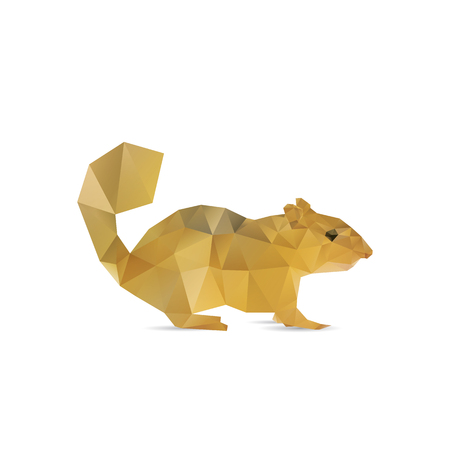 squirrel isolated: Ardilla abstracta aislada en fondos blancos