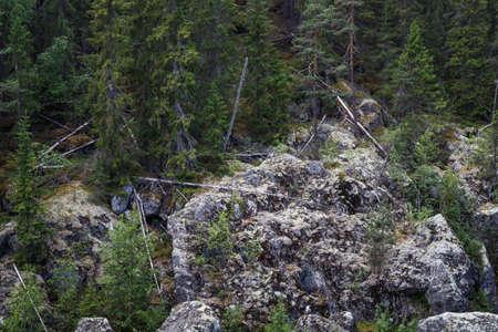 Fallen trees on the rocks at Döda Fallet in Sweden 免版税图像