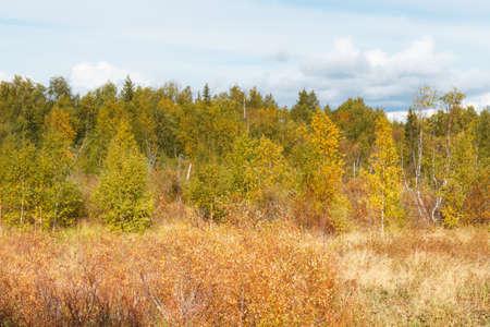 View of the forest in the autumn scenery. Tysjoarna, Sweden. Фото со стока