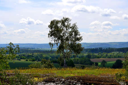 photo of birch trees with panoramic view of the landscape in the foothills of the Jesenik Mountains, summer, North Moravia, Czech Republic