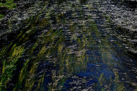 picture The level of the river Kamenice with aquatic plants subject to the flow of the river in a play of colors Reklamní fotografie