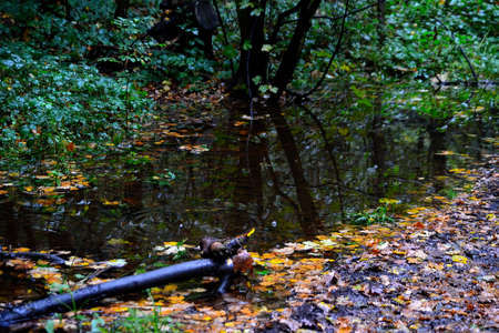 photo of an autumn forest with a temporary pond created by autumn rain in a depression by a forest road