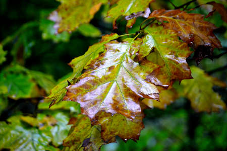 Photographs of leaves colored in subtle autumn shades of Mother Nature's color palette