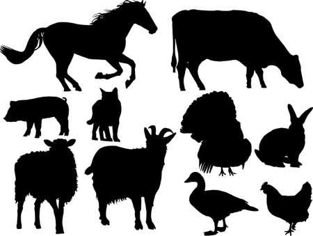 farm animal vector Vector