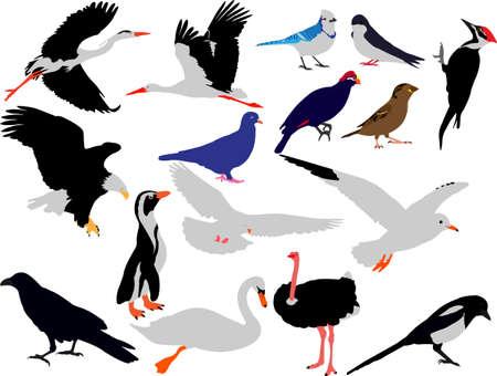 urraca: recogida de aves de vectores