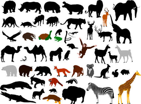 collection of wild animals vector silhouettes Stock Vector - 5749088