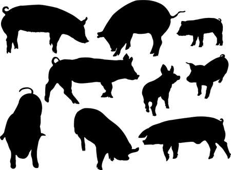 costillas de cerdo: siluetas de cerdos