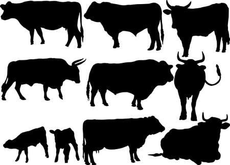 cattle: siluetas de recogida de ganado Vectores
