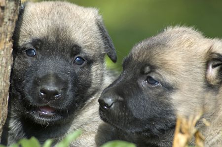 two puppys close-up