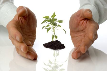 thrive: business men holding a plant between hands on white