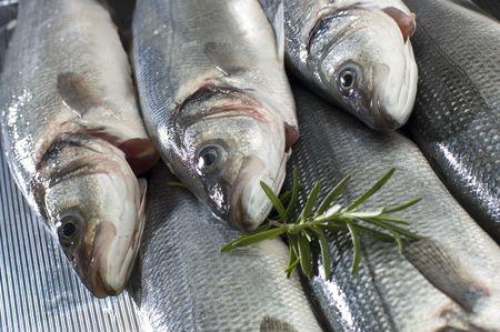 sea bass: three fresh sea bass fish close up shoot Stock Photo