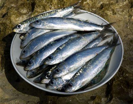 sardine: sardine fresche su un tiro alto di fine della piastra Archivio Fotografico