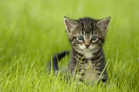 pequeño gatito que juega en el cierre de la hierba para arriba