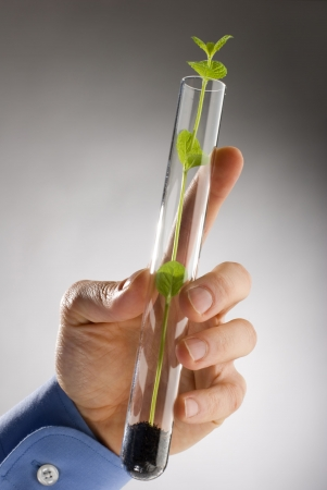 genetically modified: azienda mano vegetali geneticamente modificati in un pallone  Archivio Fotografico
