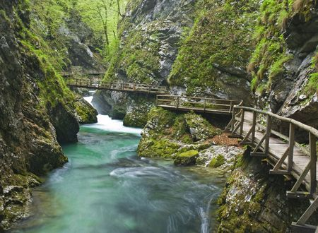 slovenia: river in green forest in vintgar - slovenia