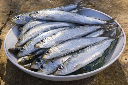 full plate of fresh sardines outside close up  photo
