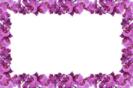 flower frame made from orchid on white background