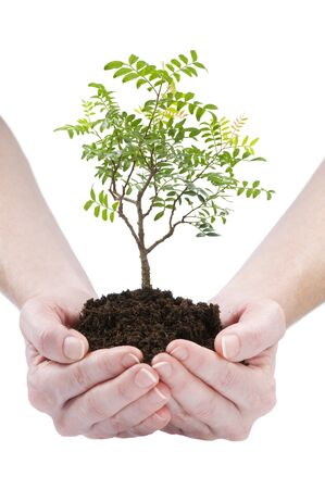earth handful: a person holding a small bonsai plant isolated Stock Photo