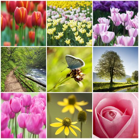 Beautiful flower collage made from nine photos photo