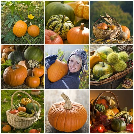 Beautiful pumpkin collage made from nine photographs photo