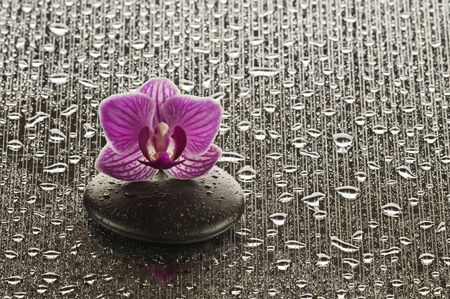 Wellness concept with zen stone and orchid photo