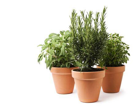 Rosemary, sage and oregano herbs isolated on white Stock Photo - 9320295
