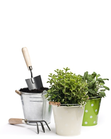 gardening tools: Fresh herbs with gardening tools isolated on white