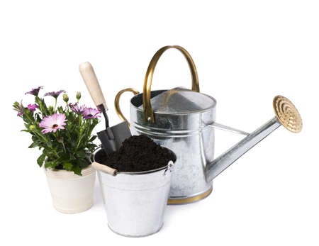 Watering can with flower and gardening tools isolated