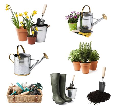 watering pot: Gardening tools and flowers isolated on white