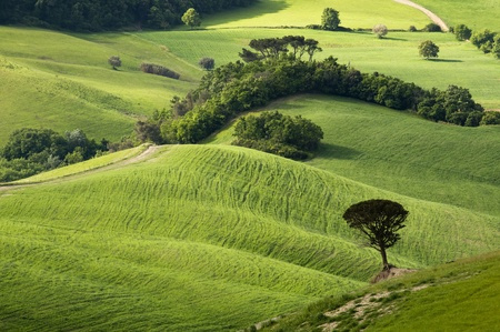Green tuscany landscape in spring time Stock Photo