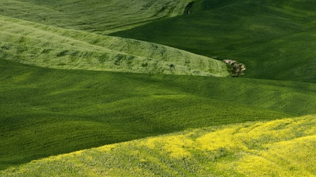 Green tuscany landscape in spring time close up photo