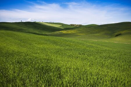 Colorful tuscany landscape in spring time   photo