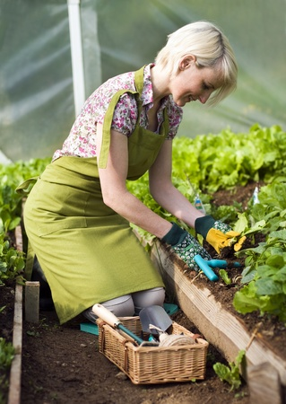 Young woman gardening in glasshouse close up photo