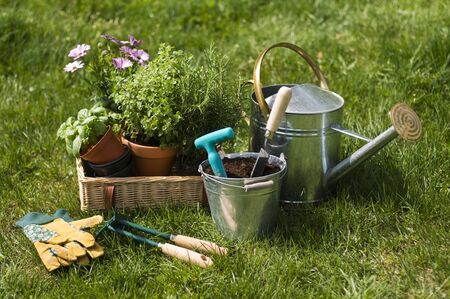Gardening tools and flower on the grass close up Stock Photo - 9663167