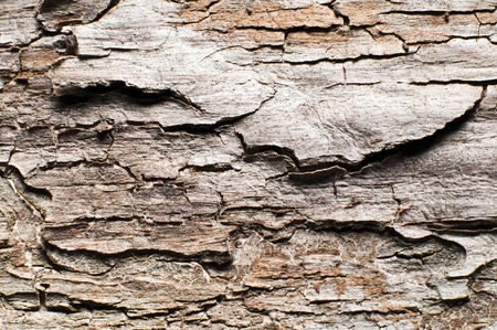 Textured wooden surface close up shoot - background photo