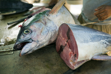 Man cutting big tuna fish close up shoot Stock Photo
