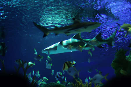 shark and fish Stock Photo - 2765112