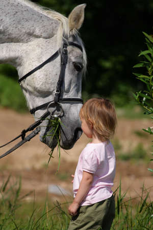 Little girl make an attempt to establish communication with big grey horse. Animal eat grass ang child see.