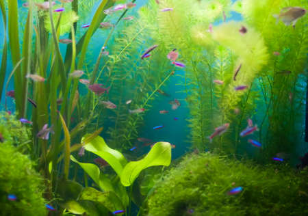 Aquarium with fish and seaweed (focus on two leaves at center).