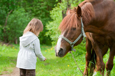 horse harness: Total trust. Big chestnut horse pulls its neck to little beautiful girl. Stock Photo