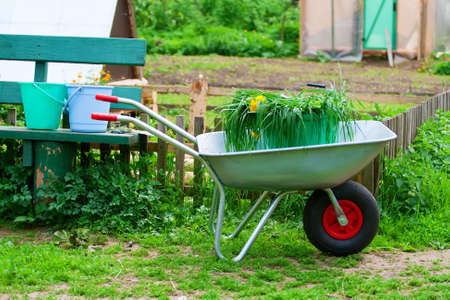 countrysides: Countrysides life. Wheelbarrow with bucket and grass.
