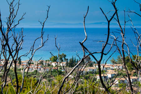 After big fire in 2006 year on Kassandra, Halkidiki, Greece. Burnt branches, blue sea and sky Stock Photo - 5497981